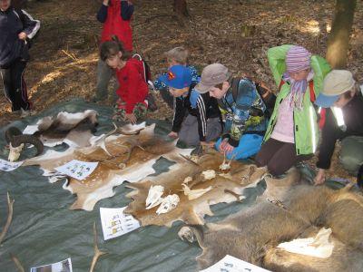 Lesní pedagogika 2014