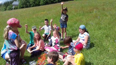 Průzkum letní přírody